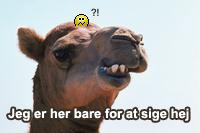 grineren kamel